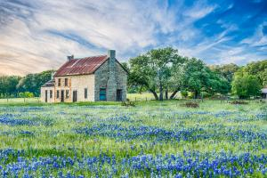 Bluebonnet Photos From the Texas Hill Country
