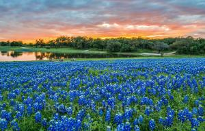 Sunset Over Bluebonnets